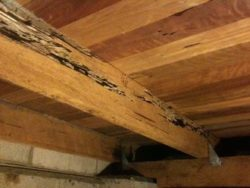 termite-damage-in-new-home-construction-beam